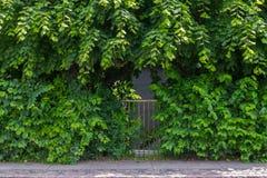 Overgrown garden gate Stock Image