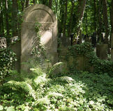 Overgrown grave stone in a cemetery Royalty Free Stock Image