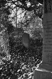 Overgrown graves Royalty Free Stock Photography