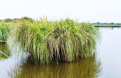 Overgrown green island in Briere Marsh, France Stock Images