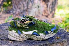 Old sneaker overgrown with green moss is on a dry stump Stock Photo