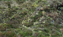 Overgrown hill detail Royalty Free Stock Photos