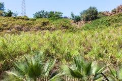 Overgrown hill slope in Giardini Naxos town. Travel to Sicily, Italy - overgrown hill slope in urban garden in Giardini Naxos town in summer Royalty Free Stock Photo