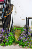 Overgrown house entrance in London Royalty Free Stock Photo