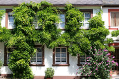 Overgrown house wall Stock Photo