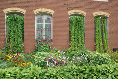 Overgrown house windows Royalty Free Stock Photography