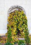 Overgrown with ivy door arch Royalty Free Stock Image