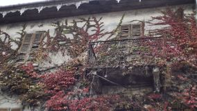 Overgrown old buildings in Italy stock footage
