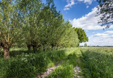 Overgrown old path in a rural area Royalty Free Stock Photography