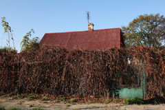 Overgrown old property in autumn Stock Photo