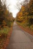 Overgrown old road landscape Stock Images