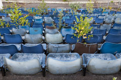 Overgrown old stadium seats Royalty Free Stock Images