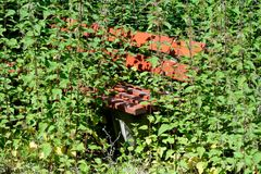Overgrown park bench Stock Images