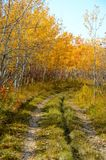Overgrown path in Autumn. Overgrown path in a park in autumn stock images