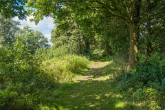 Overgrown path in the forest Stock Photos