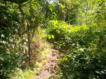 Overgrown path with nettles. Nature reclaims its place: a pathway is completely overgrown with weeds Stock Photo