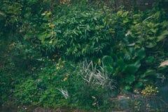Overgrown  plants in garden background rainy day Stock Image