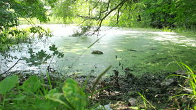 Overgrown pond in wildlife stock video footage
