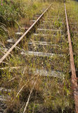 Overgrown railway line Royalty Free Stock Photos