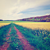 Overgrown  Road Royalty Free Stock Image