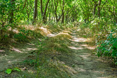 Overgrown road is going through the wood. Stock Photo