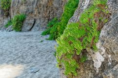 Overgrown rocks on the sandy beach. Riaci beach near Tropea, Italy stock photos