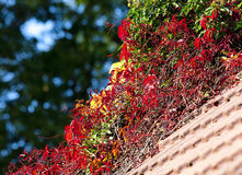 Overgrown Roof with Autumn Vegetation Stock Photos