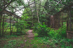 Overgrown and ruined hothouse. Abandoned scary and mysterious place. Old soviet style greenhouse in Kiev, Ukraine. Overgrown and ruined hothouse with broken royalty free stock photography