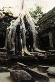 Overgrown ruins- Cambodia Royalty Free Stock Photos