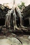 Overgrown ruins- Cambodia Stock Image