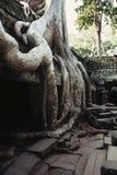 Overgrown ruins- Cambodia Stock Photography
