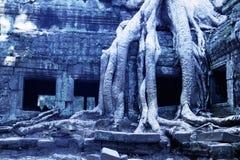 Overgrown ruins- Cambodia Stock Photos