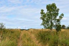 Overgrown rural road Stock Photo