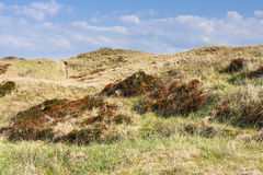 Overgrown Sand Dunes in Norderney Royalty Free Stock Images