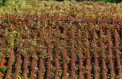 Overgrown shingle roof, Portugal Royalty Free Stock Photos