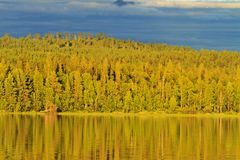 Overgrown shore of a lake with wild forest at sunset royalty free stock image