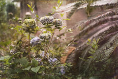 Overgrown Southern Garden Vintage Photo Stock Photography