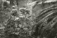 Overgrown Southern Garden Vintage Toned Photo Stock Photo