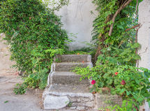Overgrown Staircase Stock Photography