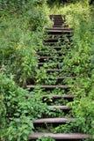 Overgrown stairs Stock Photo
