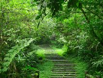 Overgrown stairs in a green forest in Xitou Nature Education Area, Taiwan stock photography