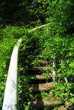 Overgrown stairs Stock Image