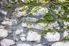 Overgrown Stone wall Royalty Free Stock Photos