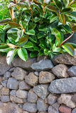 Overgrown Stone wall Royalty Free Stock Image