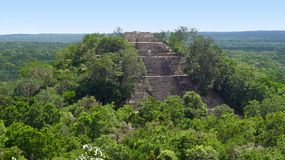 Overgrown temple at Calakmul. A mayan archaeological site in the mexican state of Campeche royalty free stock photos