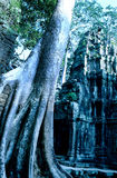 Overgrown temple- Ta Prohm, Angkor Wat ruins royalty free stock photo
