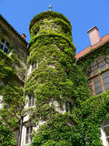 Overgrown tower Royalty Free Stock Photos