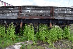 Overgrown train car Stock Image