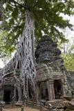 Overgrown Tree Royalty Free Stock Image