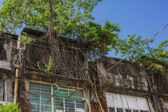 Overgrown tree roots cover an apartment roof Stock Image